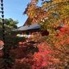 【毘沙門堂🍁京都紅葉2020】洛東山科の参道の敷きもみじを求めて😆🍁