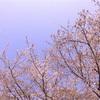 桜一会 −さくらいちえ−