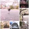 日帰りバスツアー 三重*奈良の桜の旅~上野公園