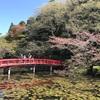 ちーば探検隊、2019年最後の桜。茂原公園と佐倉城址公園