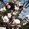 3月の慈雲寺の行事予定と中日文化センターのお知らせ