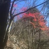 鷹ノ巣山登山 リベンジ