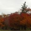 今年の紅葉は長続き♪