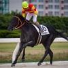 【ダービーウィーク】日本競馬の『ダービー』は日本ダービーだけじゃなかった