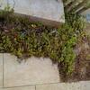 花壇の土が流れるので対処してみた