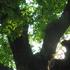 《ただの日記》 羽休めの樹