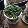 160   多肉植物たち②