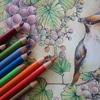 ポリクロモス色鉛筆24色セットで塗ってみた☆ぶどう&鳥ページ塗り過程です