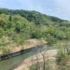 山形のマングローブ林!?【白川湖】の水に浮かぶ木