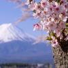 春の河口湖一泊旅行①富士山×桜