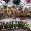 特大の花飾り:松江フォーゲルパーク(島根県松江市)