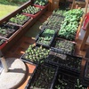 自然農法Tubize farm