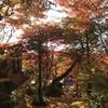 岐阜県観光大使のお散歩~たまには近所を歩いたよ。~