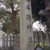 京都 平野神社 桜情報