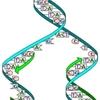 人体の細胞更新速度。新陳代謝、(DNA、(RNA)遺伝子の構造)と~~細胞250種60兆毎日1兆代謝~~分裂。遺伝情報が傷つけられ狂っているため、不規則で無秩序、機能的にも正常細胞とは異なった状態で増えていってしまうがん細胞とアルツハイマー症状の脳内老人斑蓄積=失敬細胞死と非脳神経系膠(にかわ)細胞の異常活性化。