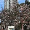 錦糸公園 櫻まつり 2017年 (1)