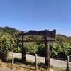 三浦半島最高峰に登る