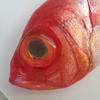 【旬外れでも旨い】千葉県産の金目鯛をさばく!(二枚卸しにする方法)