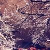 新宿の花園神社で夜桜🌸✨〜京本大我くんと向山雄治さんにオススメしたいかもしれない〜