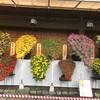 湯島天神で菊まつりが始まりました
