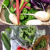 お友達農園の野菜で色々クッキング【料理レシピ付き】