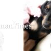 大型犬の応急処置【蛇に噛まれた・胃捻転・呼吸困難・中毒・熱中症・原因不明】