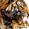 kaguyadepth 1st アルバム『九十九曲タイガー』特設サイト公開