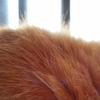 『猫』のつく名前