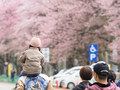 今年のゴールデンウィークは釧路市動物園と静内の桜まつりがハイライト