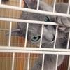 【猫の噛み癖対策】噛み癖が治すのは難しいな~