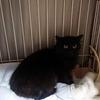 黒猫の避妊手術をしました