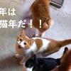 HAPPY NEW YEAR 戌年ですが猫飼いは毎年猫年です