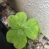 (紹介:植物)西新宿4丁目で見かけた葉っぱのいろいろを紹介するよ