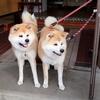 秋田犬に会える温泉宿