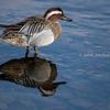 2019年2月17日の鳥撮り(1/2)-都下の河川