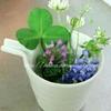 【食器】春の草花を家の中に持ち込む