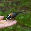 西湖野鳥の森で野鳥撮影(試し撮り)して来ました