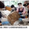 相模原市立博物館で熊本の植物標本をレスキュー中!