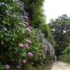 京都ではなく、鎌倉。13世期の古道を歩いてみた。