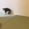 猫には個体差があることを知る