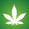 イギリスのドラック/大麻事情