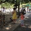 奈良公園と東大寺