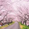 大阪の桜の名所から穴場の公園まで15選 お花見の心得