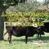 人より牛が多い平らな島の黒島でびっくり!野良〇〇を初めて見た