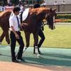 東京競馬12R 500万下 キューグレーダー2勝目!