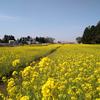 《千葉芝山町》菜の花のグリーンポート エコ・アグリパーク
