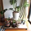 観葉植物用に移動式の台を作ってみた