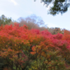 桜を見る会が話題なので、一人で紅葉を見る会を開催した