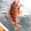 2馬力遊漁船エソジマル釣行(第20回)