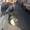 海外旅行者必見!グアテマラで成功率100%を誇る野良犬の撃退法を教えます